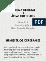 Clase 2 - CORTEZA CEREBRAL Y +üREAS CEREBRALES CLASE 2 2011