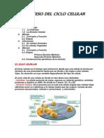 PROCESO DEL CICLO CELULAR.docx