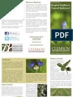 Clemson University Benghal Dayflower brochure