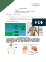 RESUMEN Sistema Nervioso