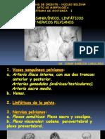 Vasos Sanguineos y Nervios de La Pelvis - Clase