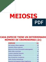 Meiosis.il