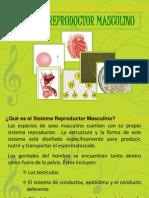 aparatoreproductormasculinoyfemenino-100523223930-phpapp02