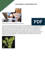 Tratamientos Caseros Para Plagas y Enfermedades de La Marihuana