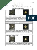 Deskripsi-Mikrofosil
