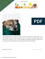 Hipotermia - Mascotas Online
