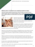 Maltrato Animal_ El Resultado de Una Sociedad Que Pierde Los Valores - Tenencia Responsable de Mascotas