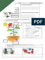 examen les plantes 3 primaria
