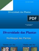 Casimira - Diversidade Das Plantas