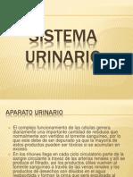 Sistema Urinario Zoila Moncada