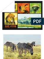 African Animals  [file size 3419kb]