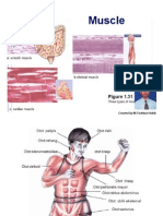 Skeletal Muscle.3