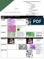 Mycology Morphology Guide
