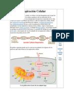bioquimica recurse