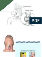 4.enfermedad tiroidea y embarazo.pptx