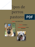 Tipos de Perros Pastore1