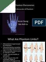 a discussion of phantom limbs