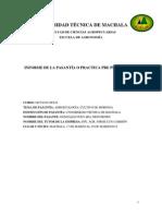 Informe Del Cultivo de Moringa