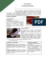 cisticercosis_porcina