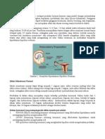 fisiologi-menstruasi.pdf