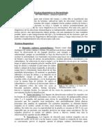 Técnicas Diagnósticas en Dermatología