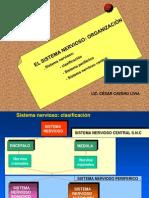 Uap. 2011- 2. Sistematización Del Sistema Nervioso.