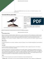Gaviotas _ Estructura y Función de Los Seres Vivos _ Icarito