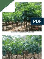 Fotos Jardin, Tocon y Planta