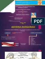 Sistema Endocrino - Diapositivas II Ciclo