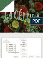 Celula 1