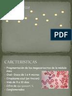 1 Trombocitopenia 3 Maryie