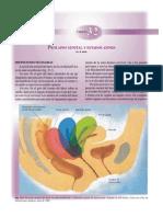 Cap32- Prolapso Genital y Estados Afines