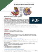Guía de Práctica de Laboratorio