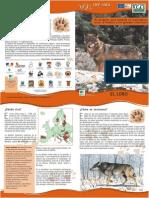 Folleto El lobo.pdf