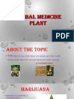 Herbal Medicine Plant