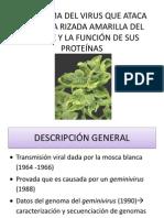El Genoma Del Virus Que Ataca a La [Autoguardado]