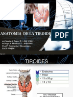 Anatomia de La Tiroides