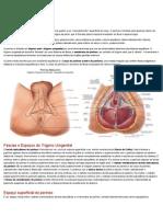 Resumo Anatomia Períneo (1)