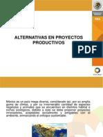 Alternativas en Proyectos Productivos (Tipos)
