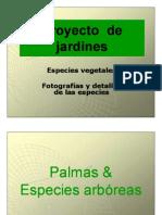 Clasificacion Botanica