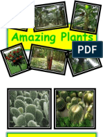 Amazing Plants Presentation