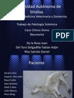 patologia ovino
