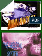 Skeletal System d3 15092011