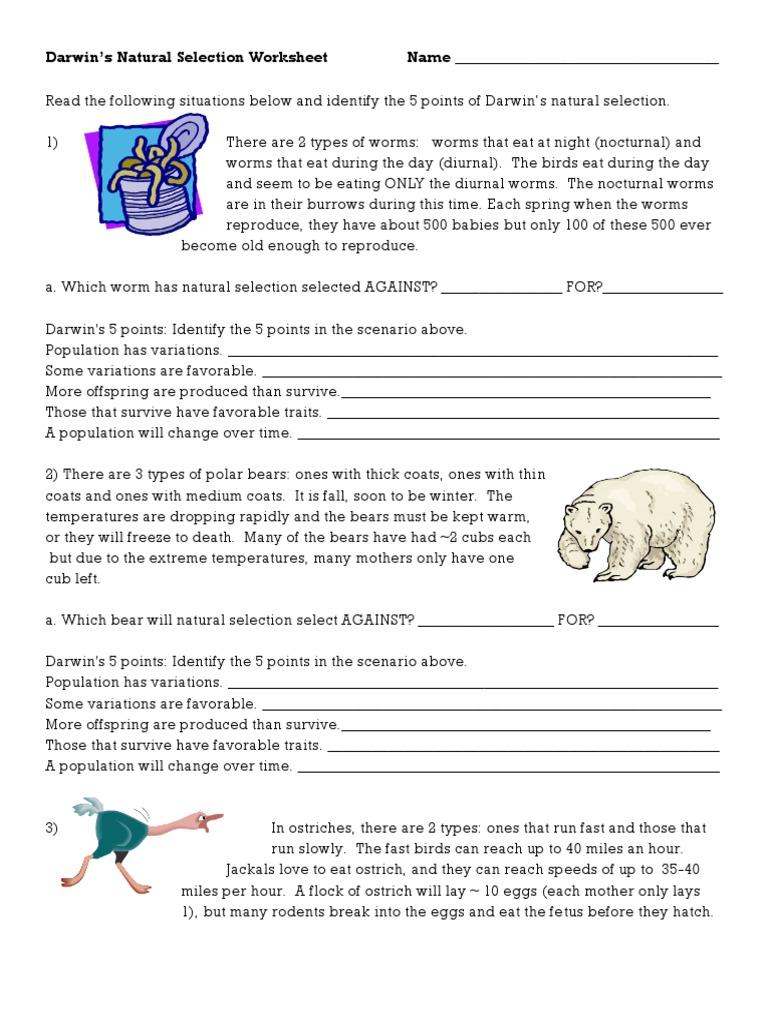 Worksheets Natural Selection Worksheet darwins natural selection worksheet bears