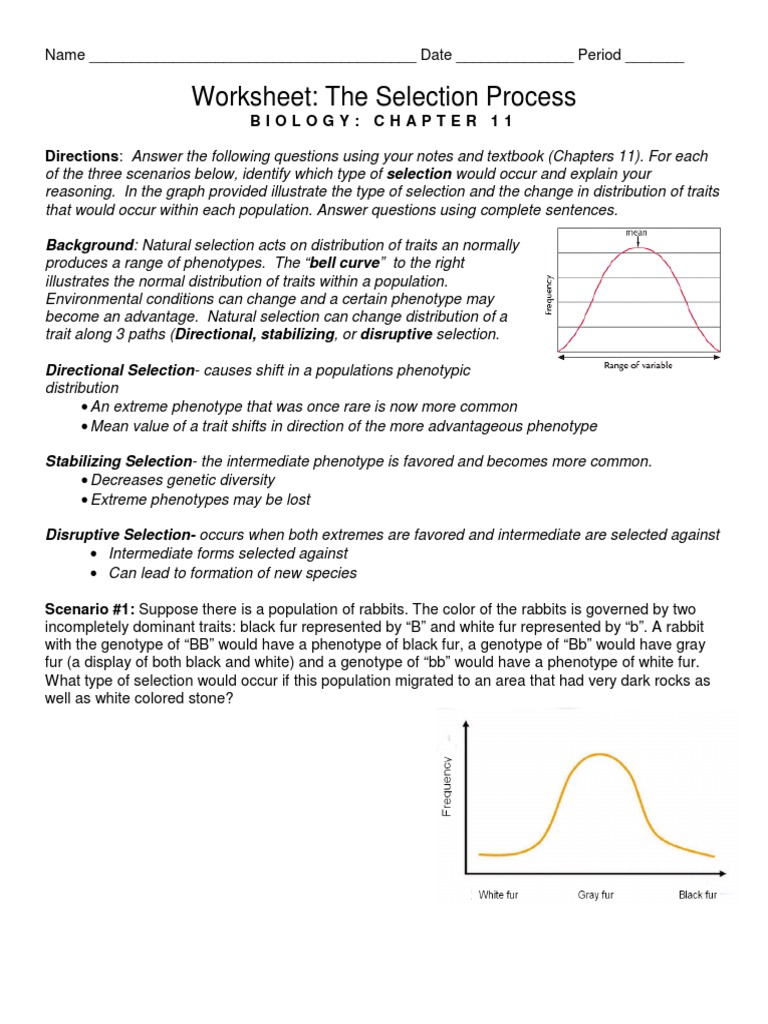 Worksheet The Selection Process Biology Chapter 11 Answers ...
