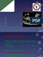Traducción Del ARN
