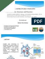 Plasmodesmos, Estructura y Función