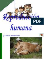 20 La Reproducción Humana