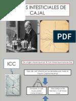 Celulas Intesticiales de Cajal