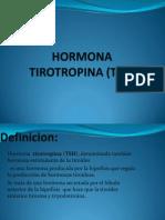 HORMONA TIROTROPINA (TSH).pptx